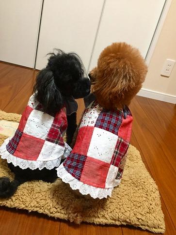 花ちゃん桃ちゃんの着画 パッチワークチュニック③