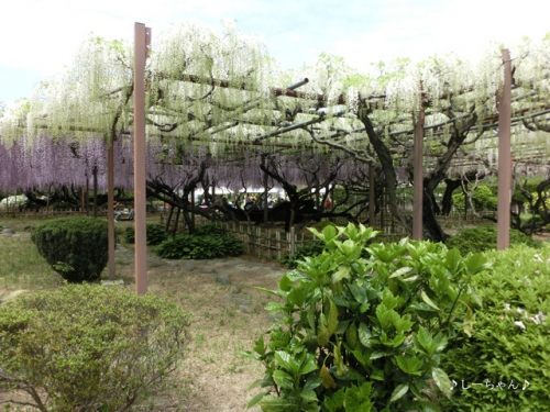 須賀の園_05