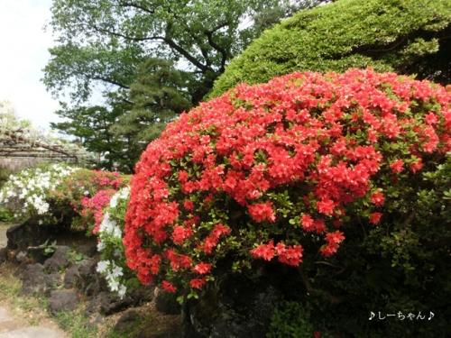 須賀の園_06