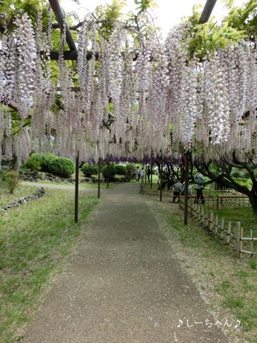 須賀の園_01