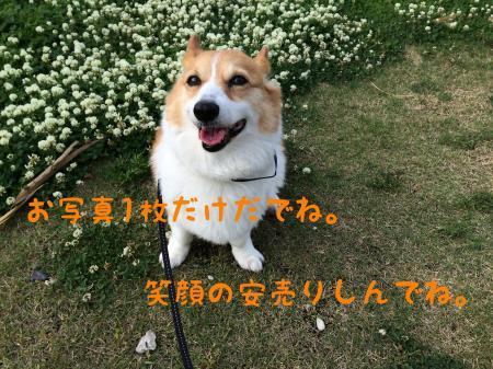 010_convert_20170608113555.jpg
