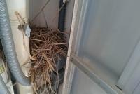 メーターボックスの鳥の巣