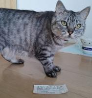 ネコと投票券