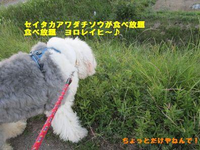 IMG_1376.jpg