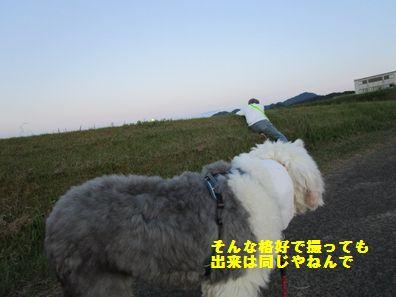 IMG_1433.jpg