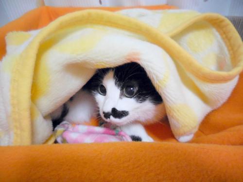 くぅ毛布中