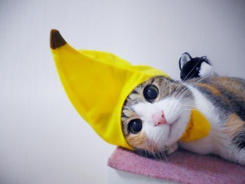みくバナナちゃん