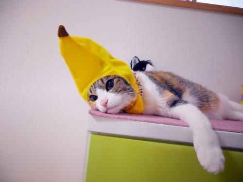 みくバナナねむねむ