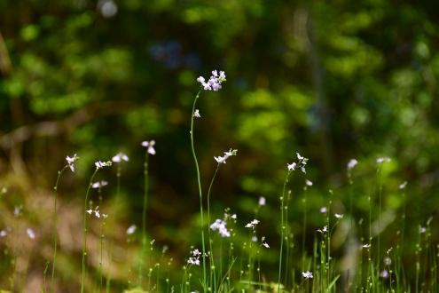 春の花 (2)