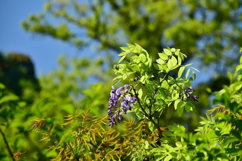 春の花 (3)