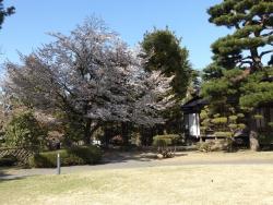 20170501藤田記念庭園3