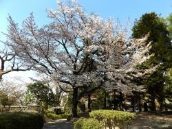 20170501藤田記念庭園1