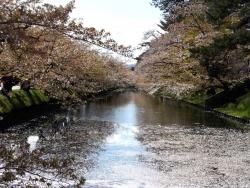 20170501弘前城桜2