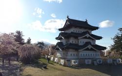 20170501弘前城桜6
