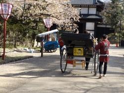 20170501弘前城桜4