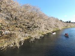 20170501弘前城桜10