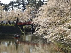 20170501弘前城桜16