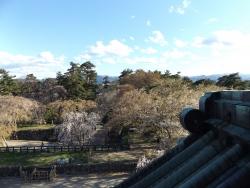 20170501弘前城桜23