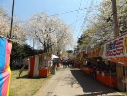 20170502芦野公園桜4