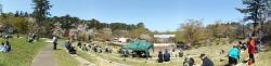 20170502芦野公園桜7