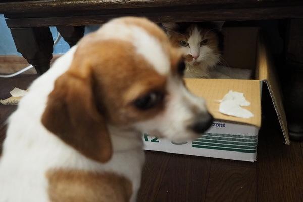 ネコのキモチ  ヒトのキモチ