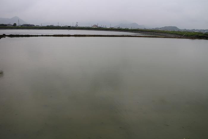 池と田んぼと 29.5.25