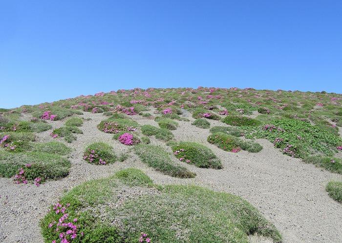 高千穂の峰に登る 29.6.3