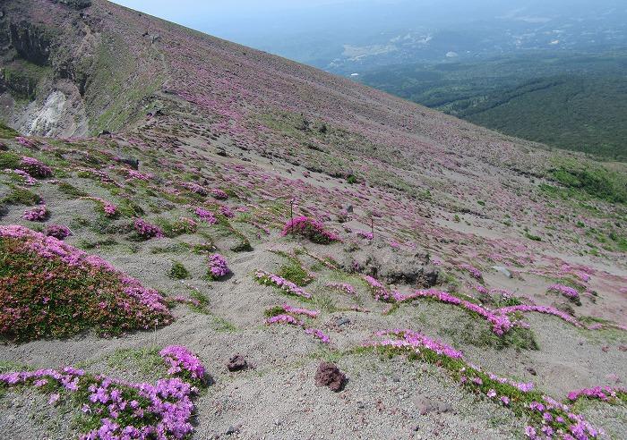 高千穂峰斜面にキリシマヤマツツジ 29.6.3