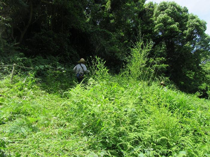 志々島草刈り楠の下 29.6.13