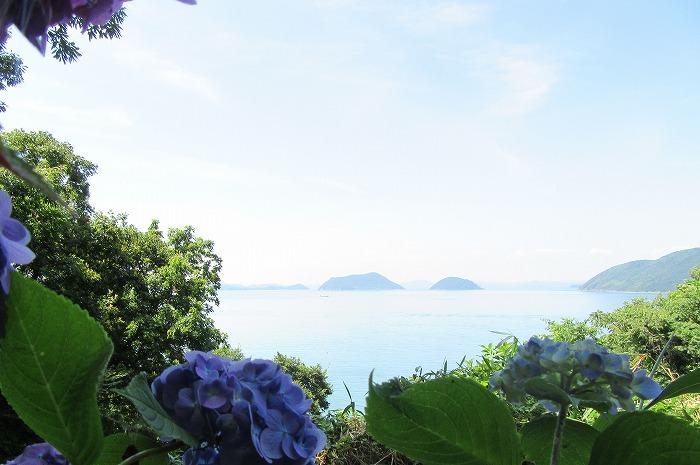 志々島は紫陽花も綺麗 29.6.13