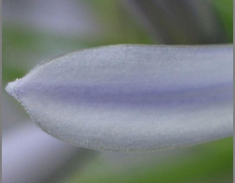 花びらだけ先っぽ 29.6.24
