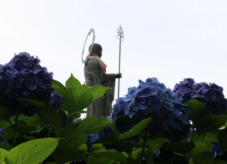 圓明院紫陽花の中に 29.6.29