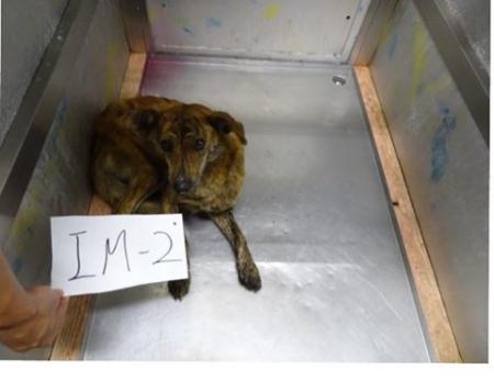 琉球犬MIX