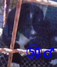 50 平成29年5月29日 保健所 宮古毎日新聞社付 雑種 ♂ 黒白 小 03~04