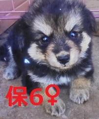 保6 平成29年5月29日 保健所 上野新里 雑種 ♀ 黒茶 小 02