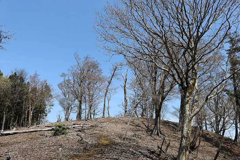 IMG0893JPG縦走路の新緑の無い風景