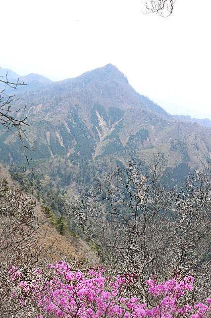 IMG0933JPGアケボノツツジと日隠山