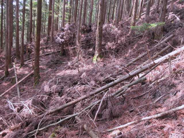 IMG0862JPG倒木地帯を尾根を目指す
