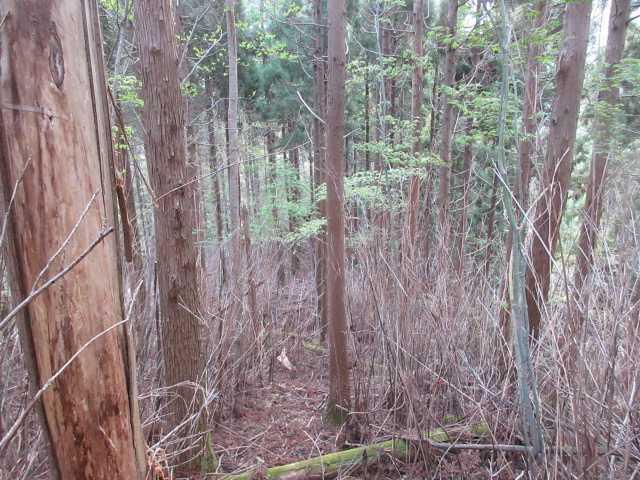 IMG0762JPG枯笹藪