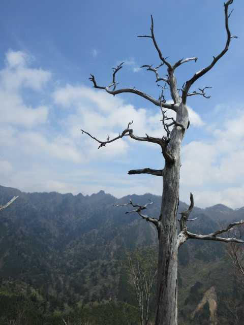 IMG0851JPG白骨樹と鹿納山気持ちよかね~