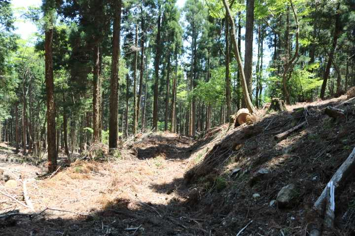 IMG1692JPG刈又山道は伐採され作業道が