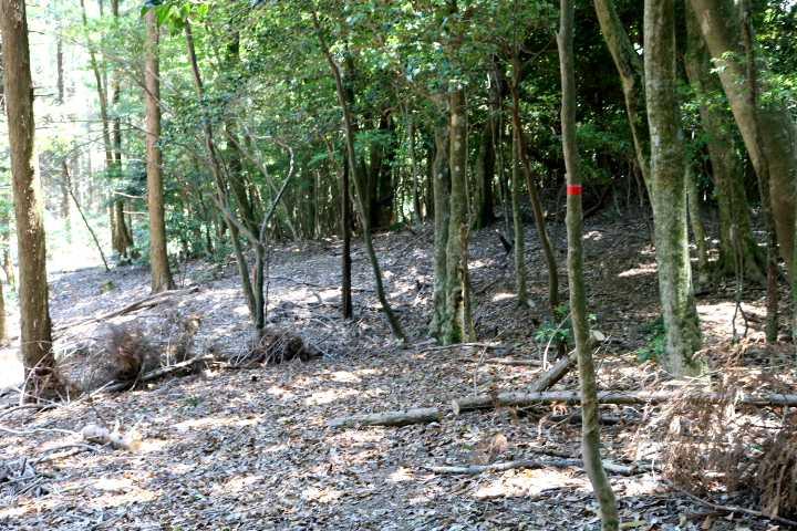 IMG1693JPG雑林との境を進む