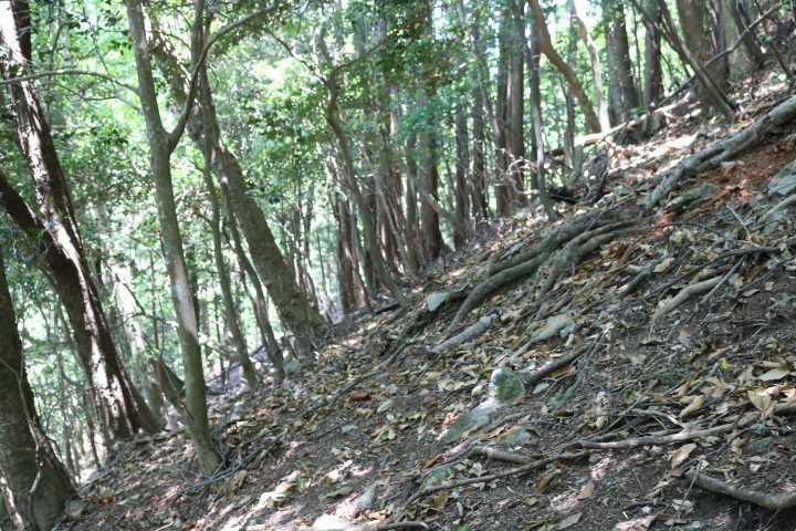 IMG1697JPG薬師林道登山道三差路手前の急登