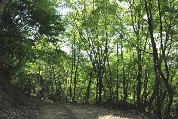 IMG1742JPG薬師林道をスタコラ豊前坊を目指す