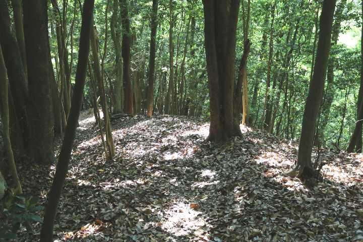 IMG2042JPG照葉樹林の落ち葉