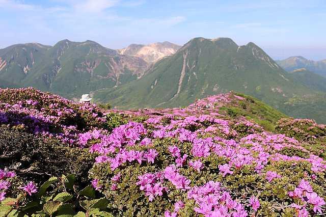 IMG2214JPGミヤマと三俣山