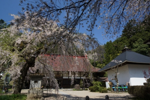 2桜 (1200x800)