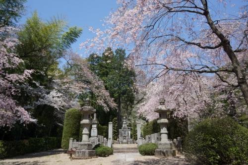 5桜と (1200x800)
