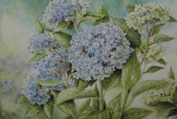 紫陽花 1706