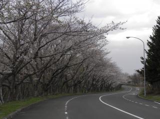 戸田記念墓園1